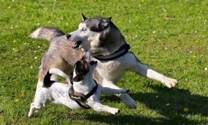 doggy playdates i aarhus